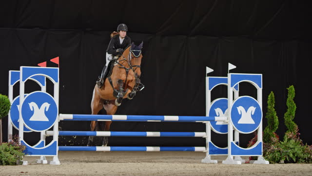 slo mo horse jumping over an oxer with female rider - bridle stock videos & royalty-free footage