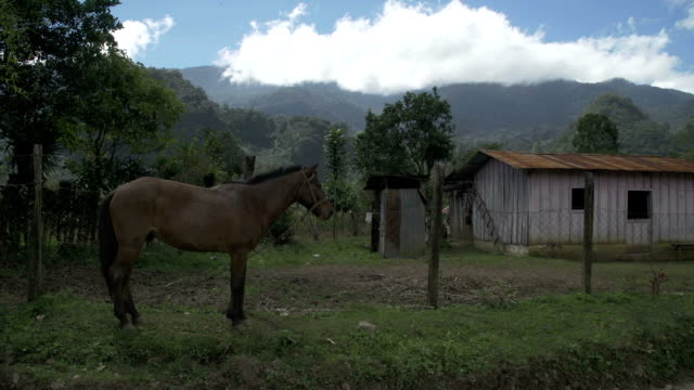 Horse leashed in farm