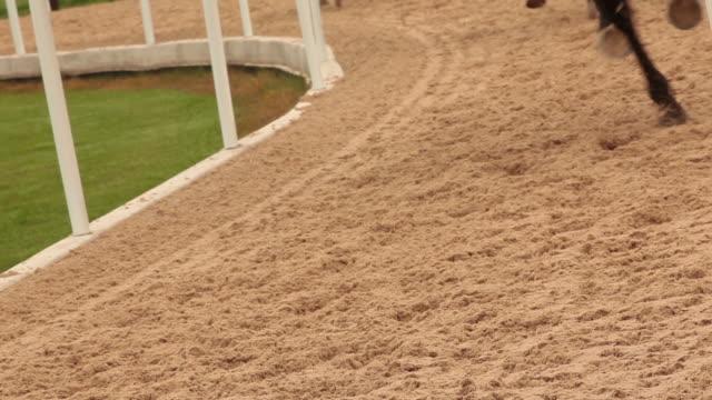 vídeos y material grabado en eventos de stock de cu horse legs cantering in sand - animales de trabajo