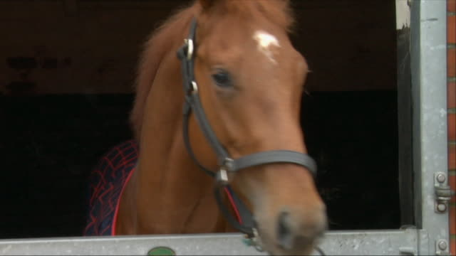 cu horse looking around inside stable / newbury, england, uk - bridle stock videos & royalty-free footage