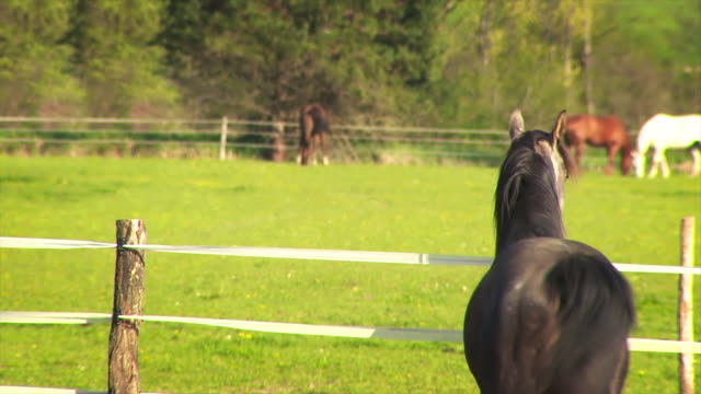 horse looking over fense - fence stock videos & royalty-free footage