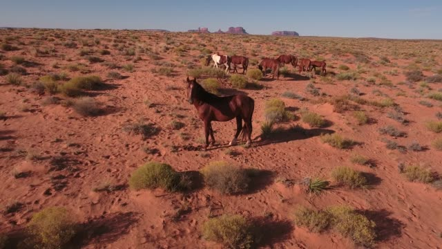 horse looking pull away wild horses, drone aerial 4k, monument valley, valley of the gods, desert, cowboy, desolate, mustang, range, utah, nevada, arizona, gallup, paint horse .mov - paint horse stock videos & royalty-free footage