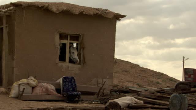 a horse looks out the window of an adobe building overlooking trash and debris in a yard. - adobe bildbanksvideor och videomaterial från bakom kulisserna