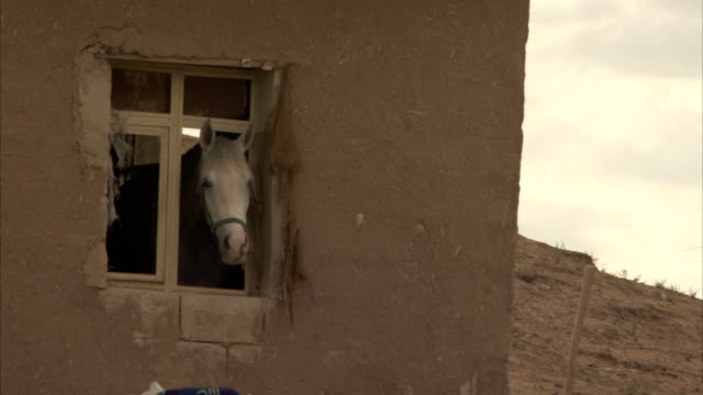 a horse looks out the window of an adobe building, then walks away. - adobe stock videos & royalty-free footage