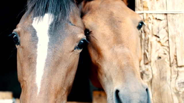 horse lieben - two animals stock-videos und b-roll-filmmaterial