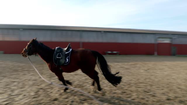 horse lunging - arbetsdjur bildbanksvideor och videomaterial från bakom kulisserna