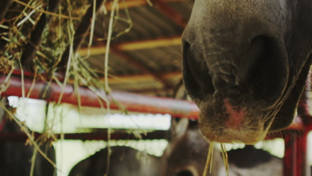 horse muzzle - barn stock videos & royalty-free footage
