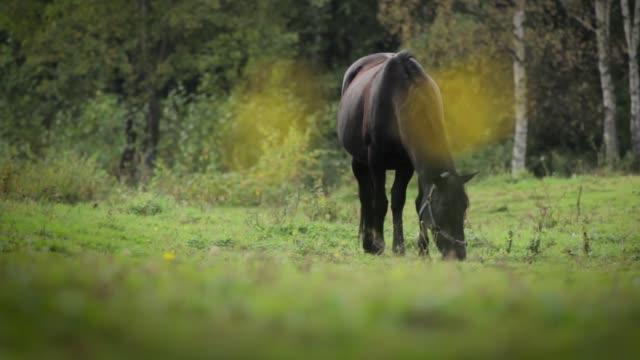 horse nibbling grass - 動物の色点の映像素材/bロール
