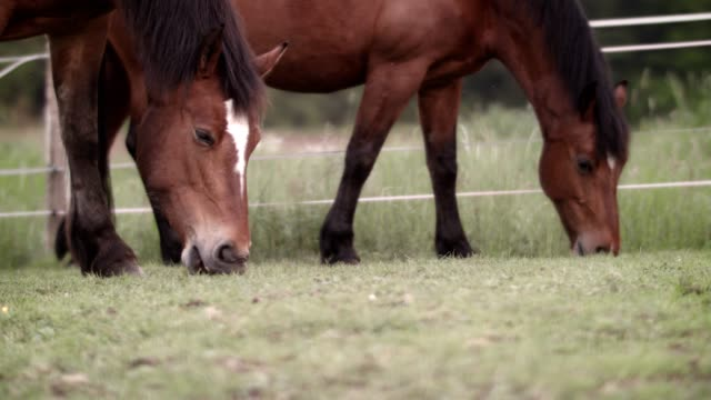 horse on meadow - livestock stock videos & royalty-free footage