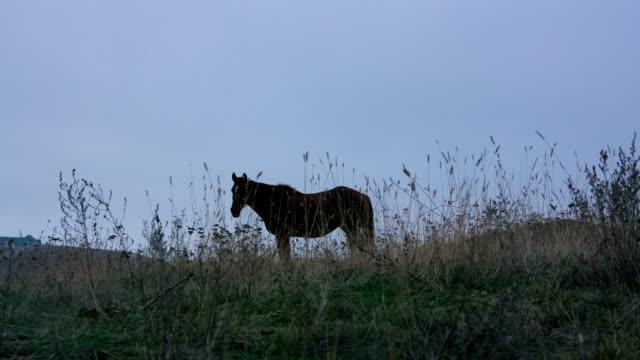 Pferd auf Weiden