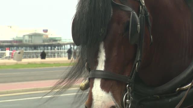 vídeos y material grabado en eventos de stock de horse on street - brida arnés