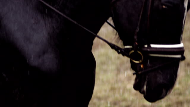 horse pawing the ground - executioner stock videos & royalty-free footage
