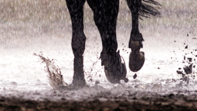 horse pawing the ground - horse stock videos & royalty-free footage