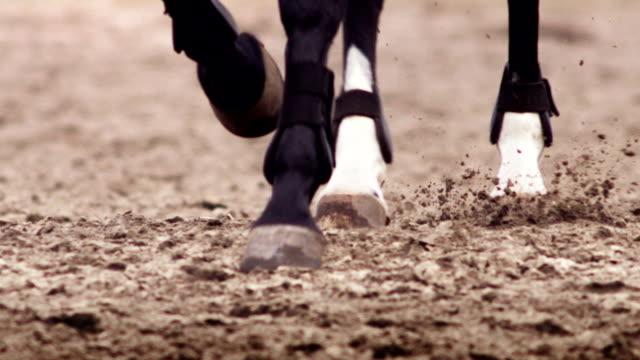 häst pawing marken - galoppera bildbanksvideor och videomaterial från bakom kulisserna