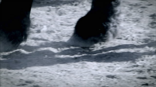 a horse paws the ground as it prepares for a joust. - huf stock-videos und b-roll-filmmaterial
