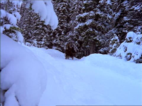 vídeos y material grabado en eventos de stock de horse pulling sleigh with 3 people past camera in forest - herbívoro