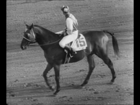 ws horse race track with crowded stands / seabiscuit walks with jockey on his back / seabiscuit races in the laurel stakes in 1938 just behind the... - laurel maryland stock videos & royalty-free footage