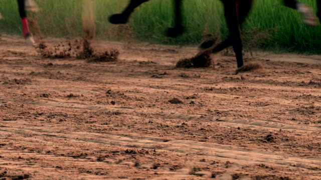 horse racing real time - gara off road video stock e b–roll