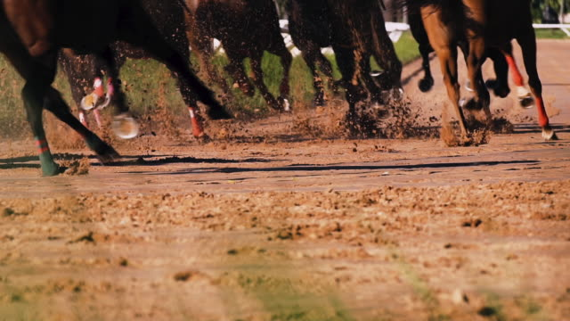 horse racing -slow motion - horse racing stock videos & royalty-free footage