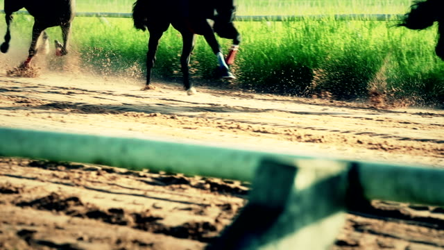 horse racing, slow motion - horse racing stock videos & royalty-free footage