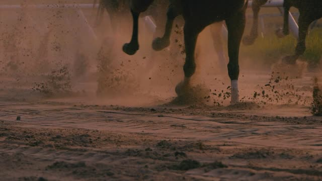 horse racing - amphitheatre stock videos & royalty-free footage