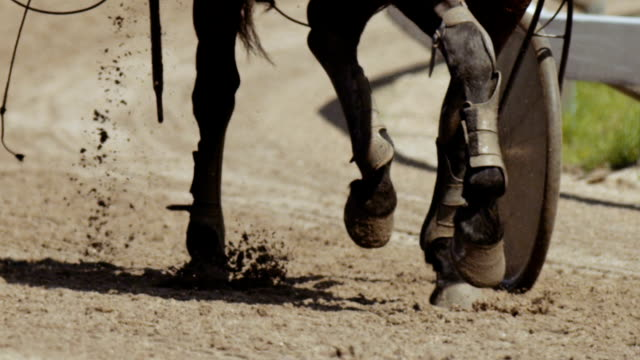 Horse racing (slow motion)