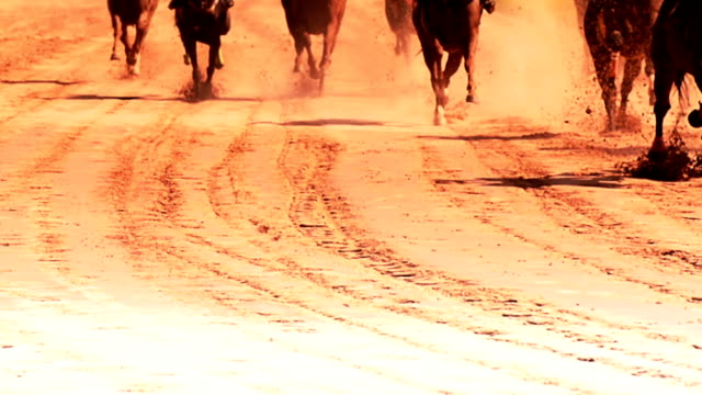 horse racing. - horse racing stock videos and b-roll footage