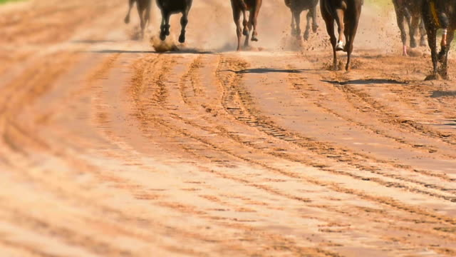 horse racing - racehorse stock videos and b-roll footage