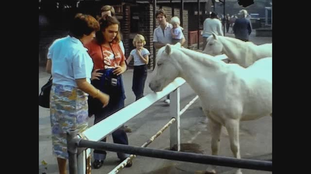 horse ranch people in 70's - brown stock videos & royalty-free footage