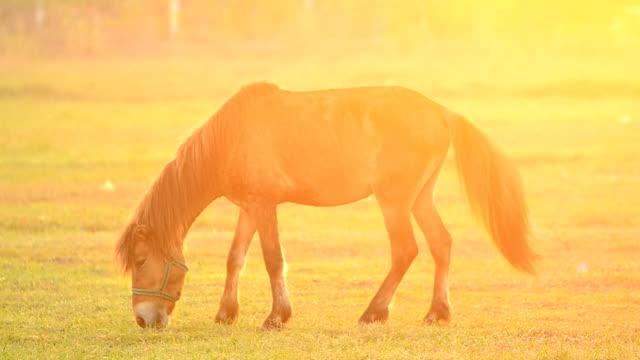 horse Entspannen und Essen Gras