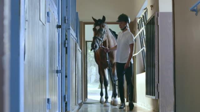 stockvideo's en b-roll-footage met ds ruiter leiden het paard in het vak - alleen één mid volwassen vrouw