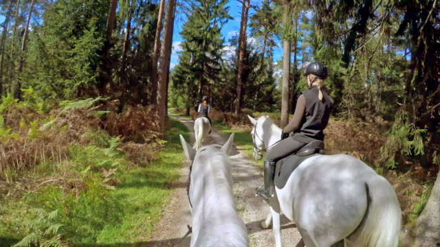 pov horse rider on a ride through forest with friends - recreational horseback riding stock videos & royalty-free footage