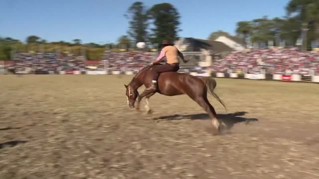 vídeos de stock e filmes b-roll de horse riders and supporters of the jineteada a traditional sport in the gaucho culture of uruguay where the riders must stay on a horse for a... - gaúcho