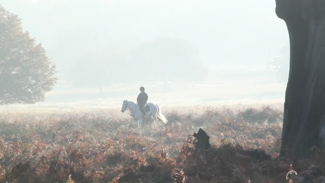 vídeos y material grabado en eventos de stock de horse riding in countryside - animales de trabajo