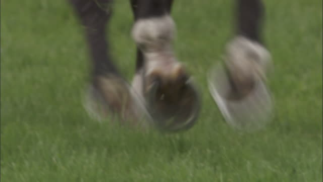 slo mo cu horse running at newbury racecourse / newbury, england, uk - horseshoe stock videos and b-roll footage