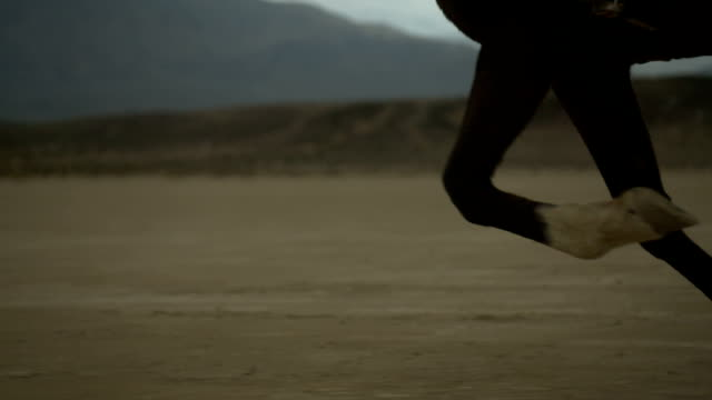 (Slow Motion) Horse Running- Hoof Close Up