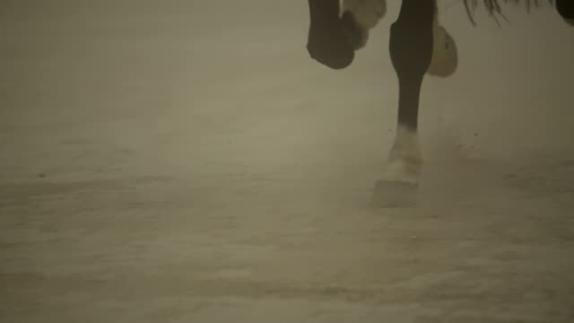 (slow motion) horse running- hoof close up - horse stock videos & royalty-free footage