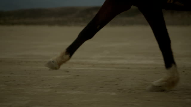 (Slow Motion) Paard Running - Hoof close-up