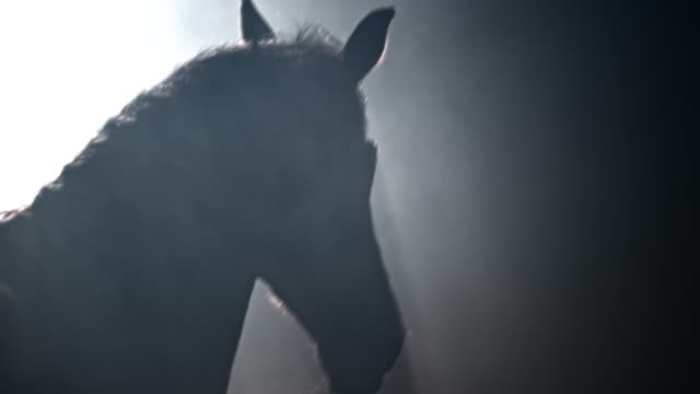 slo mo horse running into the dark - brown stock videos & royalty-free footage