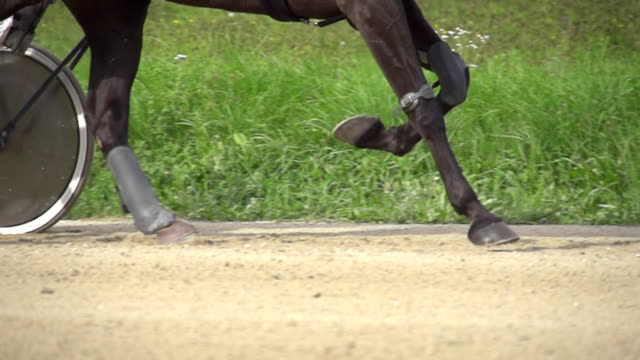 hd super slow mo: horse running on a racetrack - trot animal gait stock videos & royalty-free footage