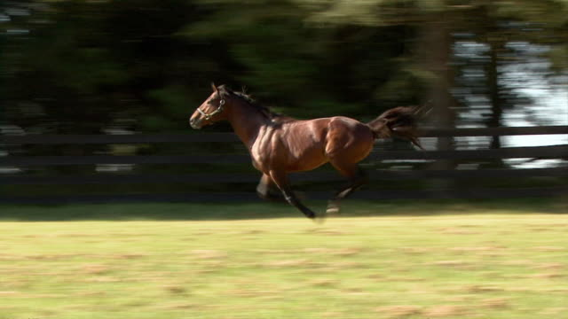 ws ts horse running on paddock / summerhill stud, south africa - ウマ点の映像素材/bロール