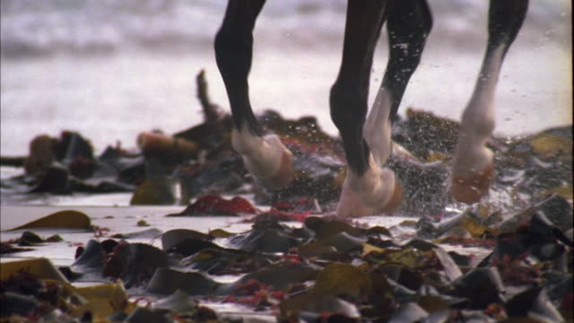 horse running through kelp on beach, muizenberg, south africa available in hd. - kelp stock-videos und b-roll-filmmaterial