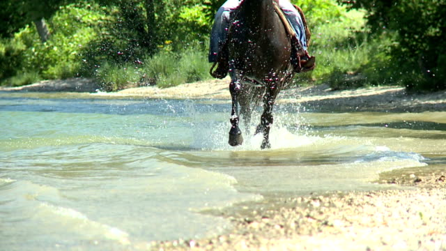 HD SLOW-MOTION: Horse running through water