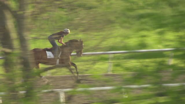 ms aerial horse running track at winstar track with trees / versailles, kentucky, united states - 動物の色点の映像素材/bロール