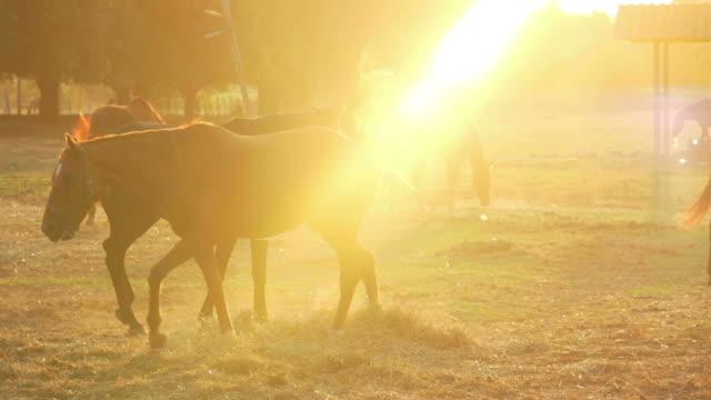 Horse Series (Super Slow Motion)