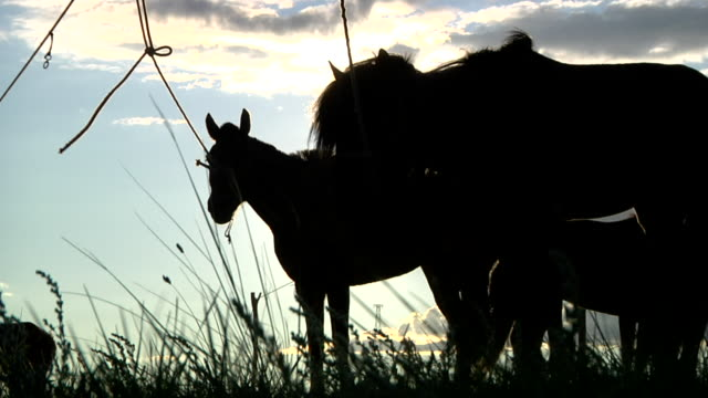 horse silloueted by sunlight - arbeitstier stock-videos und b-roll-filmmaterial