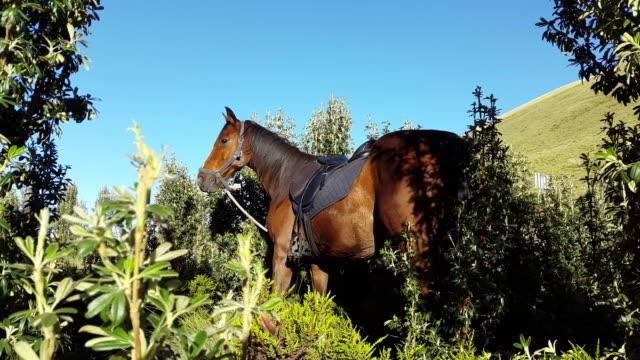 caballo ganadora en el gras internacional que las montañas en Mojanda Laguna Ecuador