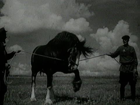 Horse Taming on Retro Farm