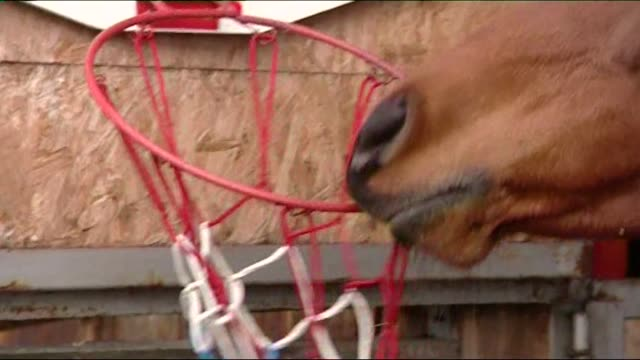 horse throwing ball into basket - horse family stock videos & royalty-free footage