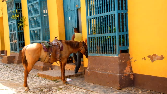 Horse tied in a cobblestone street in Trinidad de Cuba. The town is a tourist landmark visited by thousands every year